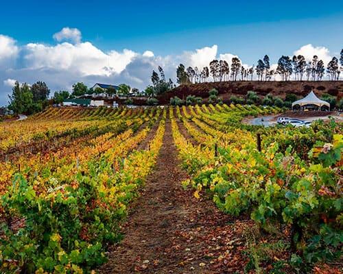vindemia-winery-atmosphere